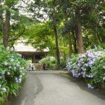 西日本一のあじさい寺「阿弥陀寺」は梅雨の時期に楽しめるお花スポット!