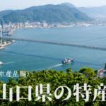 "<span class=""title"">山口県の特産品<水産品編></span>"